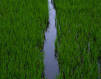 Vietnam: Landscape