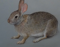 I am a Bunny (Eastern Cottontail)