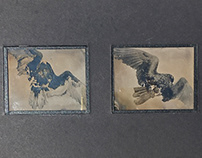 "Forgetting How to Fly; 4""x7""; AmbroTypes"