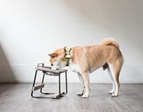 拍拍 Pets' and design : product : photography
