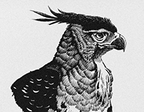 Pen and Ink Birds of 2019