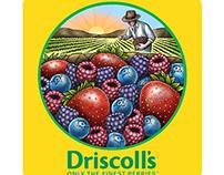 Driscoll's Logomark illustrated by Steven Noble