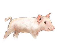 Piglet Illustrations