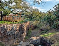 Gorilla Exhibit At The Houston Zoo