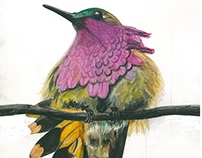 FINEART - Color pencil. Dedicated to Ghungu.
