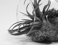 Air Plant Semiotics