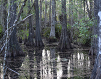 Florida Nature at Six Mile Cypress Slough in Fort Myers