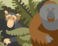 Exhibition & branding for the grate apes in Aalborg Zoo