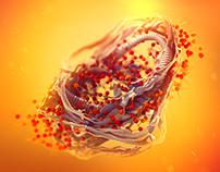 Protein–Quercetin | Scientific Report