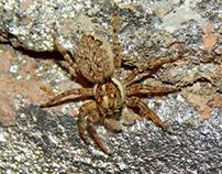 ARAÑAS / SPIDERS