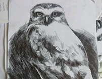 Birds ballpoint pen drawings