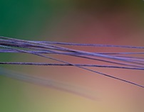 Abstract Grasses Part 1
