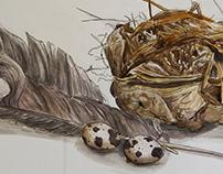 Bird's Nest Still Life