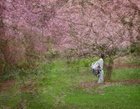 Spring Reverie