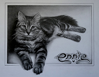 Pencil drawing of my cat Eddie