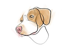 Canine With One Line Series   Part 2