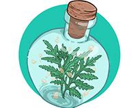 Magic plant jars