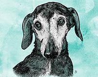 Ollie Puppy Portrait