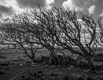 A walk to Black Heath