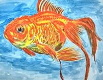 Ikan mas koki (Carassius auratus)