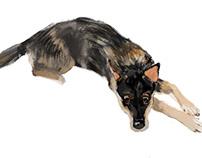 My dog portrait