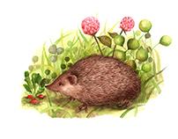 raddishearts for a wondrous hedgehog