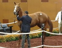 Maryland Colt Fetches Second Highest Fasig-Tipton Sale