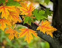 Autumn's Final Act