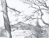 Landscape Sketches (Oregon)