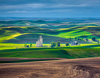 Palouse Gold