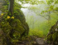 Hiking with a photographer Aleksei Sazonov
