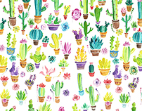 Colorful Cactuses