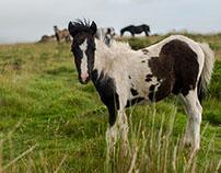 Early Dartmoor Ride, Devon
