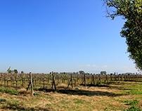 El Vino en San Miguel de Allende Guanajuato