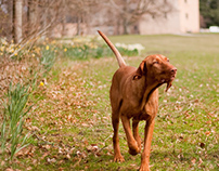 Doggie commission - 2010