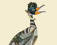 Infertile Birds: Genus Ixoruncus (collage)