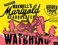 Maxwells Marigold Headquarters Watching