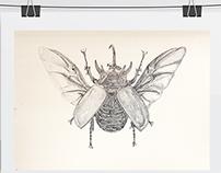 Ilustração Cientifica    Scientific Illustration
