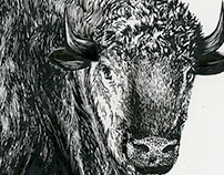 Pen and Ink Projects
