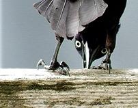 Birds of a Feather (Ontario, Canada)