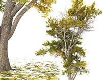 Tree 1 3D Model