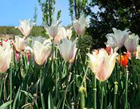 Spring's Glory - Tulsa Botanical Garden