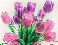 Tulips Highlighted