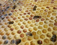 Creating a Honeycomb (Bee Exhibit Part I)