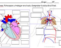 Actividades de Anatomía
