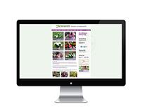 Jacranda Flowers - Website Design