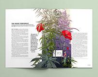 Cannabis Now - Hemp Threshold