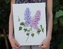 Watercolor lily Акварельная сирень