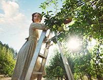 Pear Picking