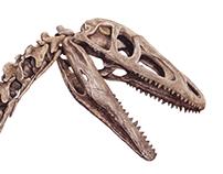 Dinosaurios de Sudamérica